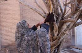 توسل جستن، اعتقادی که هنوز هم در بین شماری از زنان هرات پابرجاست