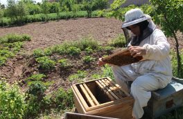 غنچهگل؛ زنی که از راه تولید عسل نیازمندیهایش را برآورده میسازد
