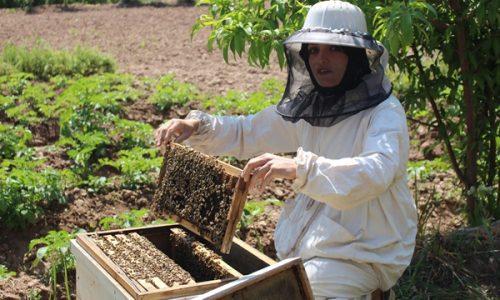 غنچه گل؛ زنی که از تولید عسل کسب درآمد میکند