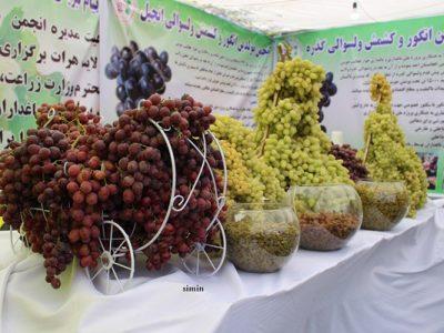 تصاویری از جشنواره انگور و عسل