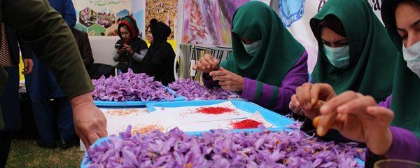 سهم ۸۰ درصدی زنان در پروسس طلای سرخ هرات