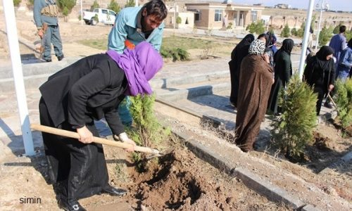 برگزاری برنامهی نهالشانی در باغ شمیره