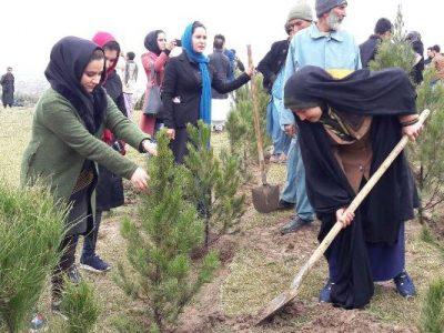 برگزاری همایش صلح سبز