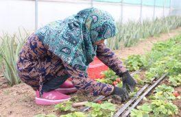 فعالیت بیش از ۵۸هزار زن کشاورز در هرات