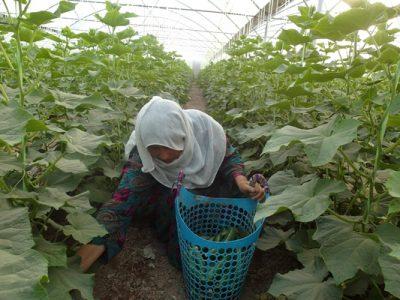 افزایش علاقهمندی زنان به حرفهی کشاورزی