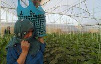 زنان کشاورز از مشکلات اقتصادی شان میگویند