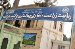 انتقاد زنان کشاورز از برنامههای ادارۀ زراعت هرات