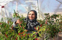 وزارت اقتصاد: برای بیش از  پنج میلیون زن اشتغالزایی میشود
