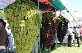 برگزاری چهارمین جشنوارۀ انگور و عسل در هرات