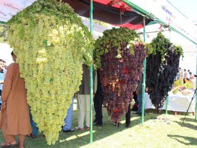 برگزاری جشنواره انگور و عسل در هرات