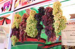 جشنواره انگور و عسل در هرات برگزار شد
