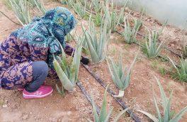 میکانیزه شدن زراعت؛ عامل افزایش زنان در صنعت کشاورزی