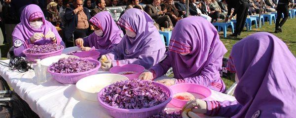 جشنواره ملی گل زعفران در ولایت هرات