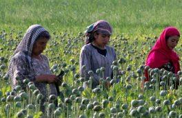افزایش نقش زنان در فروش و قاچاق مواد مخدر در هرات