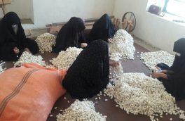 ۹۵درصد تولیدکنندگان کرم ابریشم در هرات زنان اند