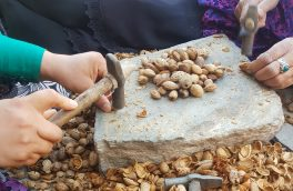 روایتی از زندگی زنان بادامشکن