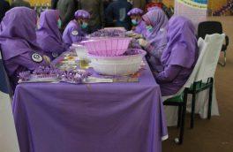 زنان زعفران کار هرات: دولت از آنان پشتیبانی نمیکند