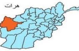 یک زن در هرات با خوردن داروی سمی به زندگیاش پایان داد