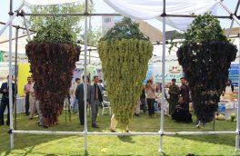 سهم کمرنگ زنان در جشنواره انگور و عسل