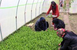 افزایش ۱۵ درصدی سهم زنان در کشاورزی